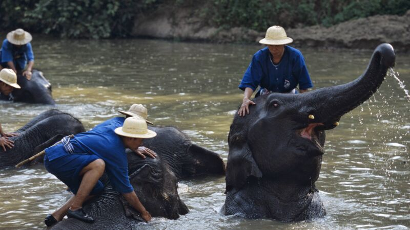 Elefanten baden im Elephant conservation center in Thailand